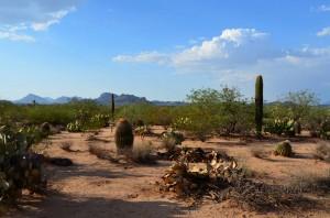 In the tohono (desert)