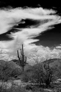 Saguaro-sky_DSC3137-GS-sw-dba