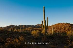 Saguaro. DSC6391-sw-dba-1